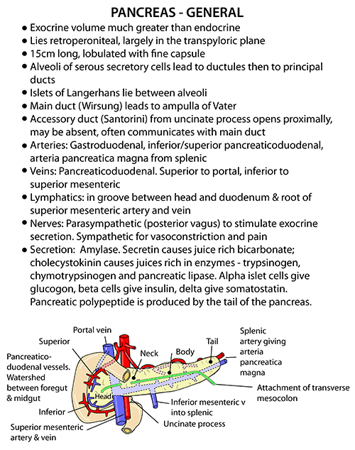 Instant Anatomy Abdomen Vessels Veins Pancreas