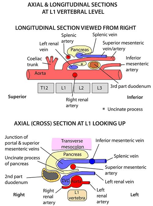 Instant Anatomy - Abdomen - Vessels - Arteries - Abdominal ...