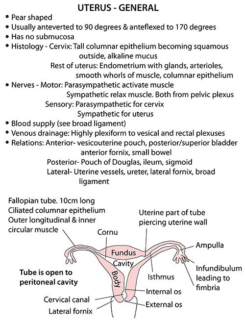Instant Anatomy - Abdomen - Vessels - Veins - Uterine veins