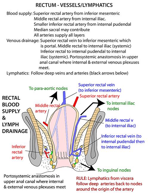 Instant Anatomy - Abdomen - Vessels - Veins - Rectal (portosystemic ...