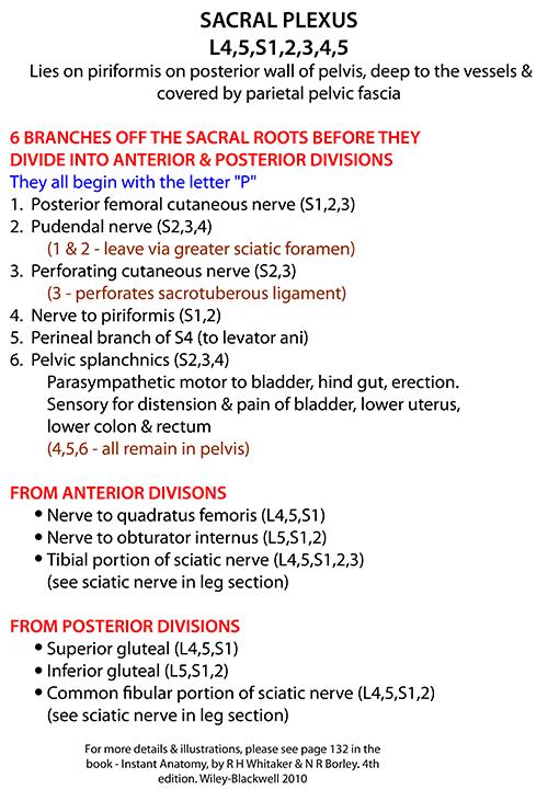 Instant Anatomy - Abdomen - Nerves - Sacral plexus - diagrammatic