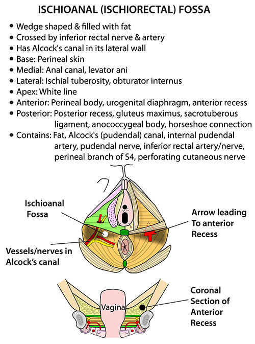 The Abdomen (Human Anatomy) - Picture, Function, Parts. - WebMD Anatomy images of abdomen