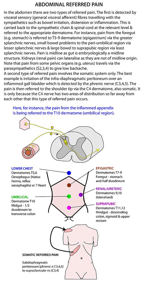Instant Anatomy - Abdomen - Nerves