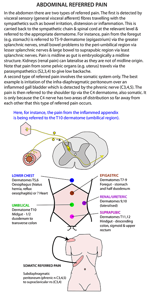 Instant Anatomy - Abdomen - Nerves - Referred pain