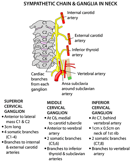 Instant Anatomy Head And Neck Nerves Autonomic Cervical