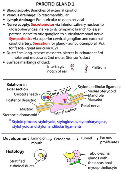 Instant Anatomy - Head and Neck - Areas/Organs - Parotid region ...