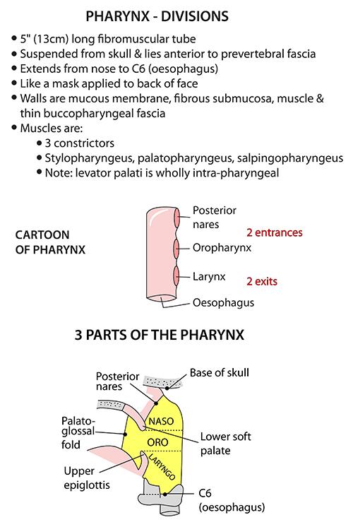 Instant Anatomy Head And Neck Areasorgans Pharynx General