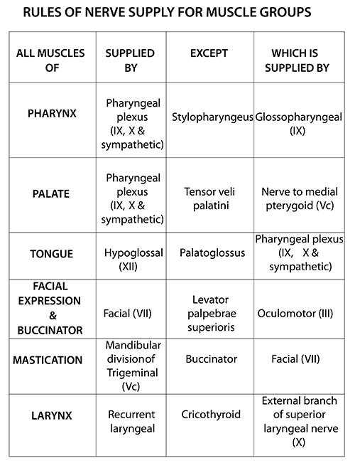 nerve supply of heart pdf