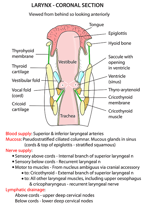 Lycoronalsection on diagram view