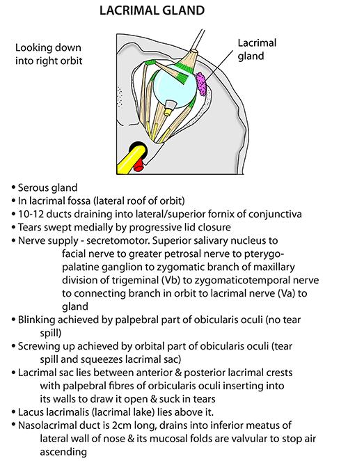 Instant Anatomy Head And Neck Areasorgans Eye Orbit