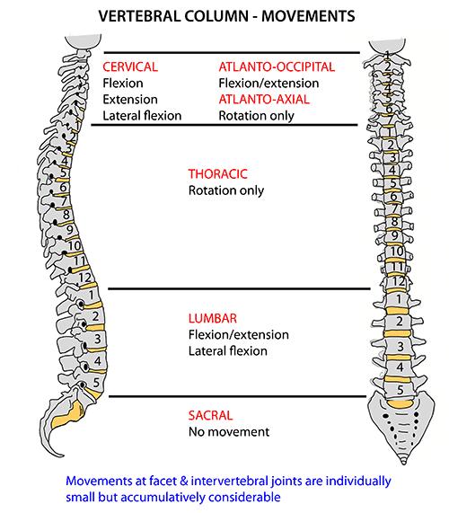Instant Anatomy Head And Neck Areasorgans Vertebral Column