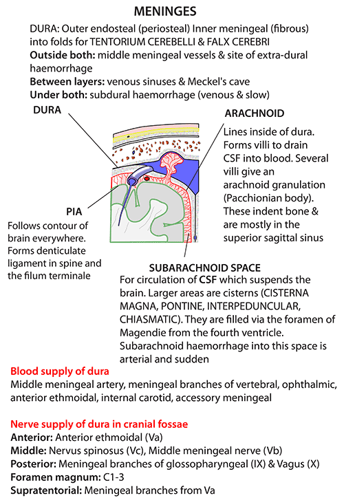 Instant Anatomy - Head and Neck - Areas/Organs - Meninges - General