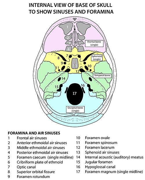 Instant Anatomy Head And Neck Areasorgans Skull Foramina