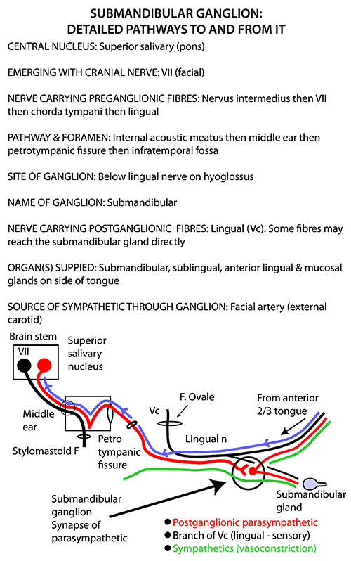 Instant Anatomy - Head and Neck - Nerves - Autonomic - Submandibular ...