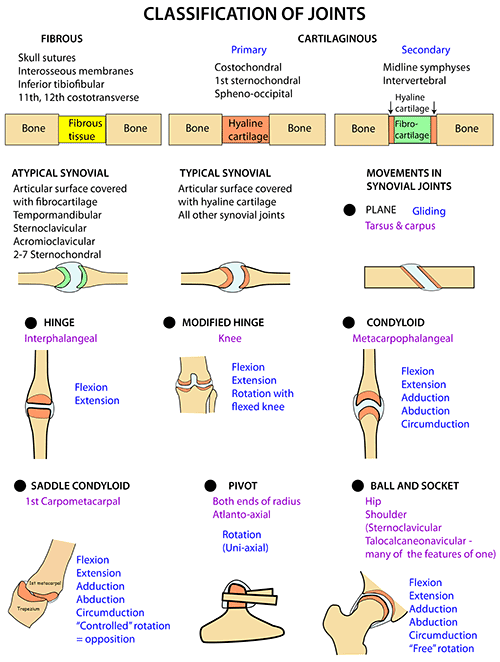 Instant Anatomy - Upper Limb - Joints - Classification