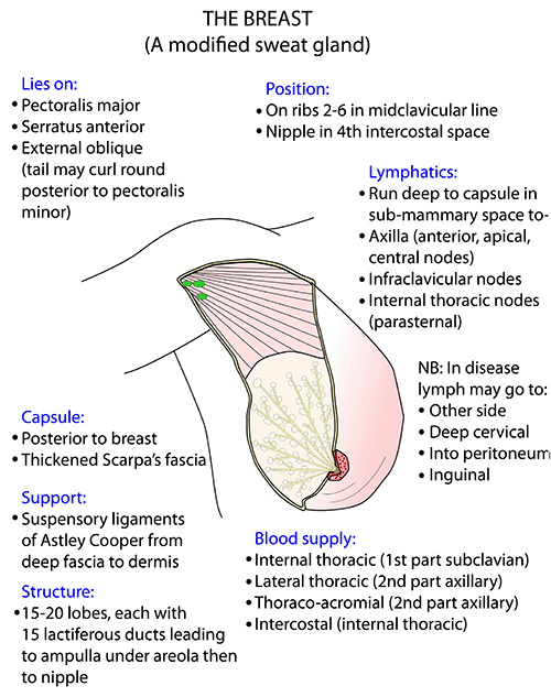 Instant Anatomy Upper Limb Areasorgans Breast Topography