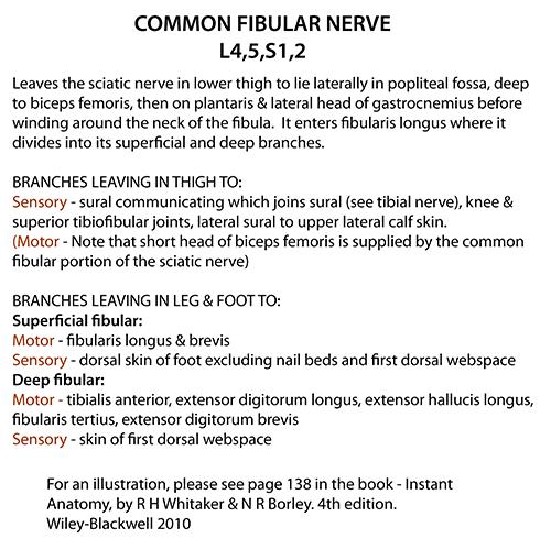 Instant Anatomy - Lower Limb - Nerves - Common fibular
