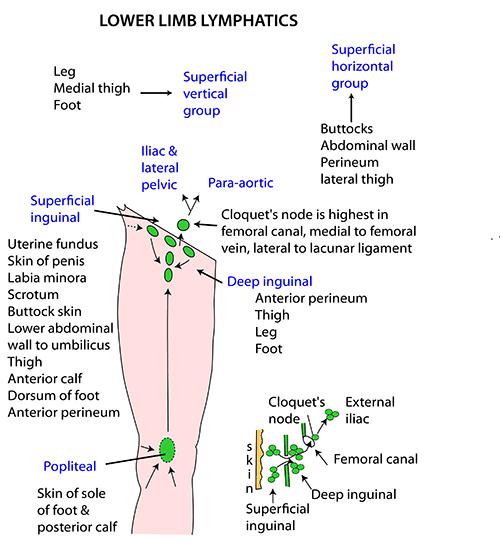 Node Cloquet Diagram - Trusted Wiring Diagram •