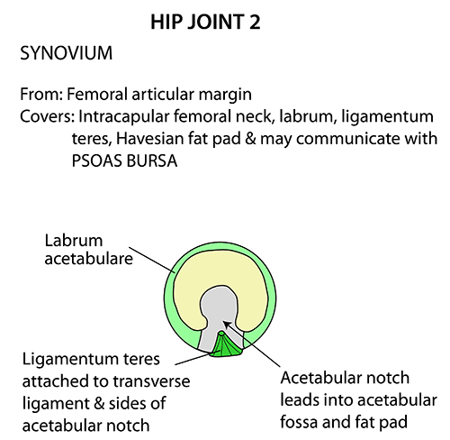 Instant Anatomy Lower Limb Joints Hip Topography