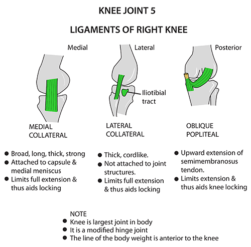 Instant Anatomy Lower Limb Joints Knee Ligaments