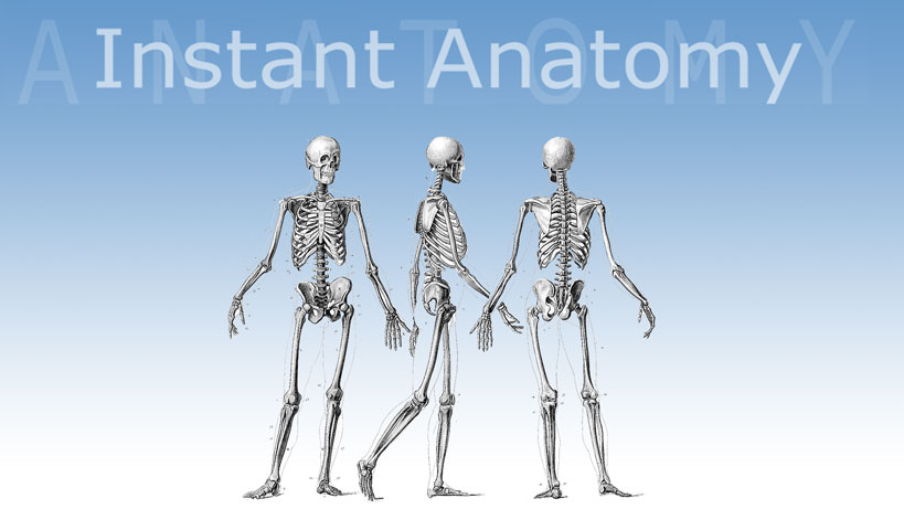Instant Anatomy - Learn human anatomy online - Select an area to begin